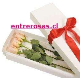 CAJA CON TRES ROSAS ROSASDAS: MR804