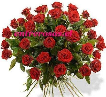 RAMO REDONDO CON 24 ROSAS ROJAS : FCR224